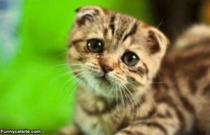 awww-3-sad-face